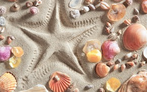 Picture sand, beach, background, star, shell, summer, beach, background, sand, marine, starfish, seashells