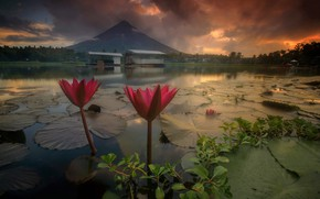 Picture landscape, flowers, nature, lake, dawn, Lily, morning, the volcano, water lilies, Philippines