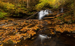 Picture autumn, forest, foliage, waterfall