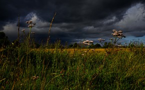 Picture the sky, grass, clouds, meadow, stormy sky, Helichrysum
