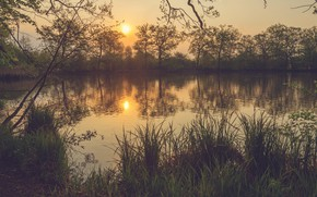Picture grass, the sun, light, trees, sunset, branches, dawn, shore, the evening, morning, pond