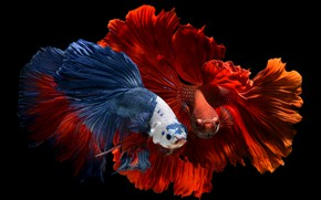 Picture fish, background, black