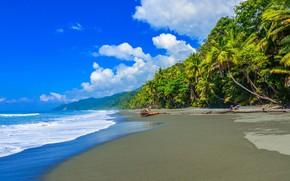 Picture sea, beach, clouds, palm trees, Caribbean, Costa Rica