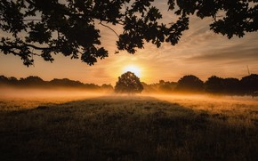 Picture Field, Tree, Grass, Light