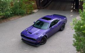 Picture purple, Dodge, Challenger, R-T Scat Pack