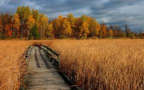 Picture field, autumn, grass, trees, bridge, photo