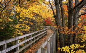 Picture autumn, bridge, Park