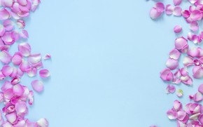 Picture flowers, background, blue, roses, petals, buds, pink, flowers, background, petals, roses