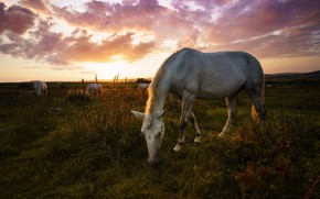 Picture sunset, horse, horse, the evening, grazing