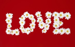 Picture love, flowers, letters, chamomile, love, flowers, romantic, camomile, floral