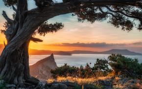 Picture sea, landscape, nature, stones, tree, rocks, shore, morning, Crimea, pine, New Light
