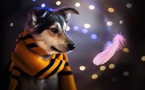 Picture face, dog, scarf, a feather