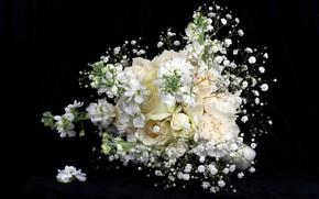 Wallpaper flowers, roses, bouquet, black background, white flowers, gypsophila, soft petals