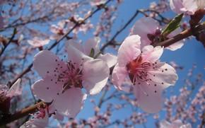 Picture April, Spring, flowering