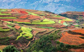 Picture China, field, Dongchuan