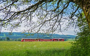 Picture greens, field, forest, the sky, grass, clouds, branches, red, blue, tree, branch, foliage, view, train, …