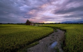 Picture road, field, summer, house