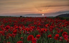 Picture sunset, Maki, poppy field