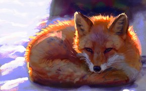 Picture winter, snow, Fox, by Meorow