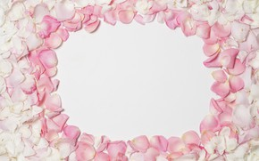 Picture background, petals, pink, pink, background, petals, frame, floral