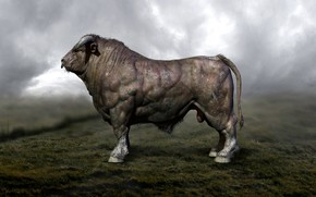 Picture Bull, Male, Muscles, Парнокопытные