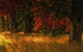 Picture autumn, forest, grass, trees, nature, glade, Holland, Jan-Herman Visser