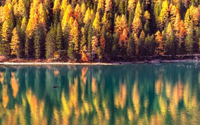 Picture autumn, forest, the sun, trees, lake, boat, Alps, Italy, The Dolomites, Braies