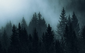 Picture forest, trees, night, nature, fog