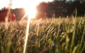 Picture Nature, Grass, Sun, Morning, Sunlight