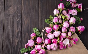 Picture flowers, roses, petals, pink, white, wood, pink, flowers, beautiful, petals, roses