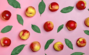 Picture leaves, background, nectarine