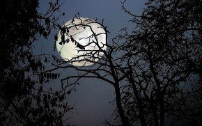 Picture trees, night, branches, nature, the moon, the full moon