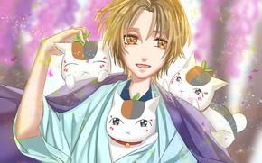 Picture cat, guy, Natsume Yuujinchou, Madara, youkai, Book of friendship Natsume, Notebook friends Natsume