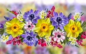 Picture Graphics, Daffodils, flowers