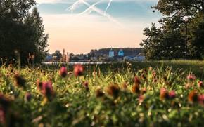 Picture summer, landscape, nature, lake, grass, Свято-Троицкий Островоезерский монастырь, Тосканка