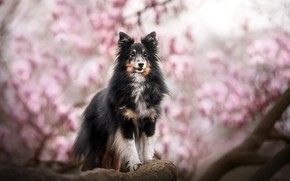 Picture each, dog, spring