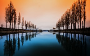 Picture trees, water, lake constance