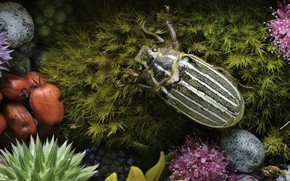 Picture flowers, moss, beetle, Martin Dollenkamp