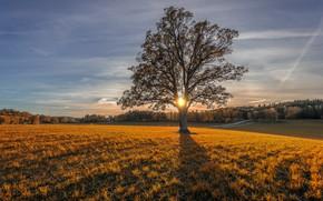 Picture field, autumn, sunset, tree