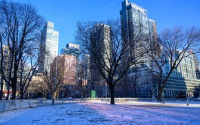 Picture winter, the sky, the sun, snow, trees, blue, home, Canada, Toronto