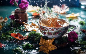 Picture autumn, leaves, water, flowers, squirt, tea, moss, Cup, bokeh