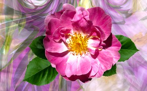 Picture Roza, Graphics, Flower
