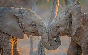 Picture Africa, elephants, South Africa, Kapama Private Game Reserve