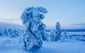 Picture winter, snow, trees, landscape, nature, ate