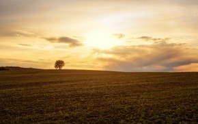 Picture field, summer, tree, the evening