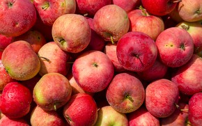 Picture drops, apples, harvest, red, fruit, a lot, fresh