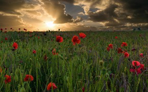 Picture summer, the sky, the sun, clouds, sunset, flowers, clouds, Maki, red, poppy field