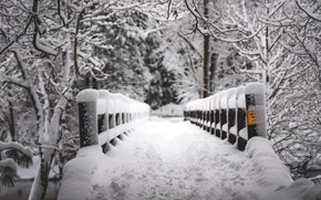Picture Nature, Winter, Bridge, Snow, White, Trees