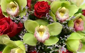 Picture flowers, roses, Bouquet, orchids