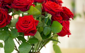 Picture roses, bouquet, red